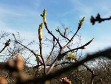 Wir vertrauen darauf: Der Frühling kommt!